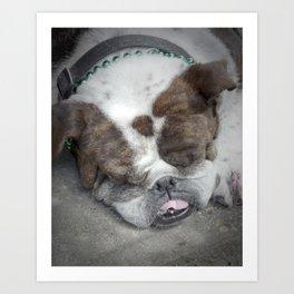 Bulldog (St. Patrick's Day), 2011.  New Orleans, LA. Art Print