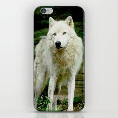 Grey Wolf iPhone & iPod Skin