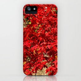 Red Japanese Maple iPhone Case