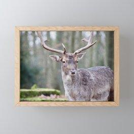 Deer Oil Painting  Framed Mini Art Print