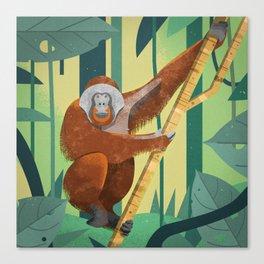 Orangutan Canvas Print