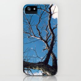 Stretching Toward Spring iPhone Case
