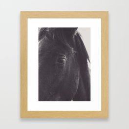 Original wild horses photo, nature landscape, animal lovers, love, black & white photography, horse Framed Art Print