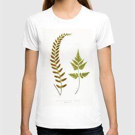 Edward Joseph Lowe - Asplenium Pulchellum and Asplenium Pumilum T-shirt