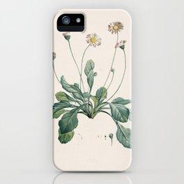 Daisy Flower Botanical Illustration iPhone Case