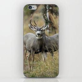 two bucks iPhone Skin