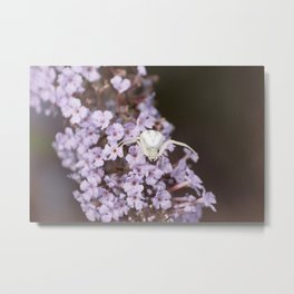 White Crab Spider Metal Print