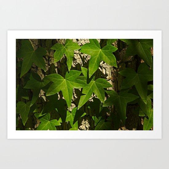 Sunny ivy leafs on a tree bark Art Print