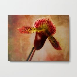 Ruby Lady Slipper Orchid Metal Print