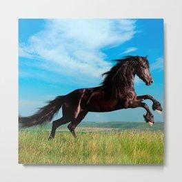black and wild Stallion Rearing Horse Metal Print