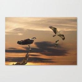 Osprey at Sunset Canvas Print