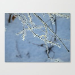 Nature's Splender Canvas Print