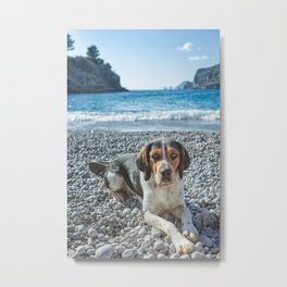 dog on the beach Metal Print