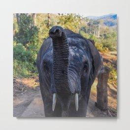 Meeting an Elephant Metal Print