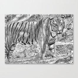 Malayan Tiger (Harimau) Canvas Print