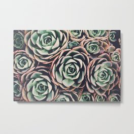 Succulent IV Metal Print