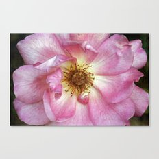 Hearts are earned Canvas Print