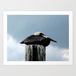 Sea Bird  Art Print