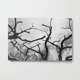 Spines of the Sky Metal Print
