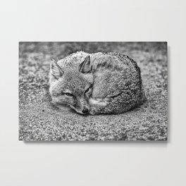 TINY FOX Metal Print