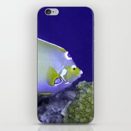 Queen Angelfish From Side iPhone Skin