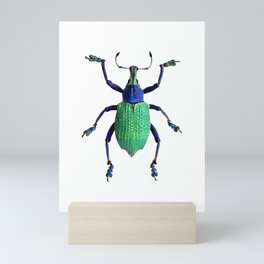 Eupholus Weevil Beetle Mini Art Print