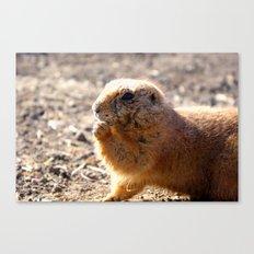 prairie dog Canvas Print