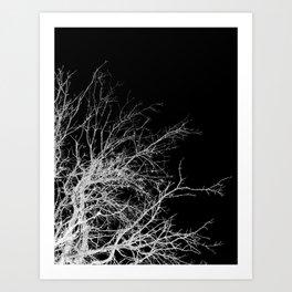 WHITE BRANCH Art Print