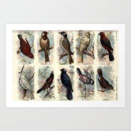 Sepoy Finch, Red-headed Bunting, Chinese Bulbul, Canary Bird, Brazilian Tanager, Bell Bird, Orchard Oriole, Blue Bullfinch, Java Grosbeak, Nightingale25 Art Print