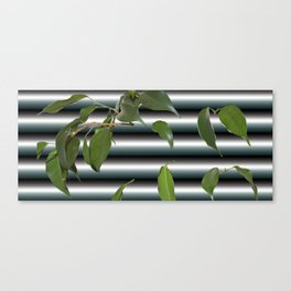 Ficus Canvas Print