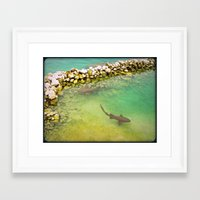 sharks Framed Art Prints featuring Sharks by FortuneArt&Photography