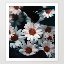 All Tucked In || Flower Photography Art Print