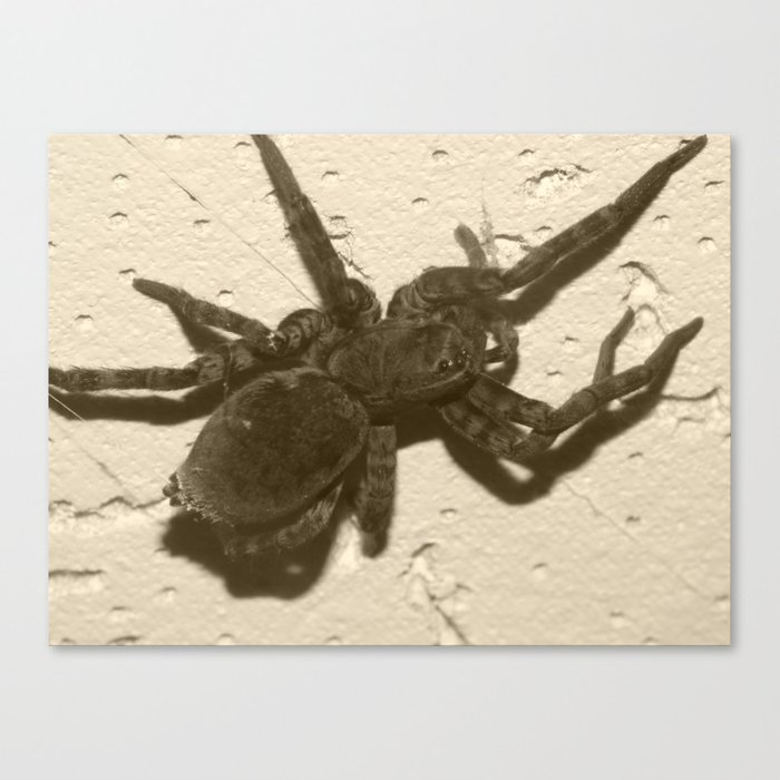spider on the ceiling Canvas Print