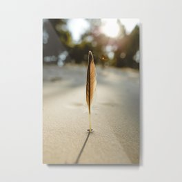 Feather in the Sun. || Moody Pictures. || Sunny Moments. || Sandy Beach. Metal Print
