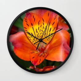Amazing Alstroemeria Inca Wall Clock