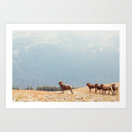 Rams, Landscape Art Print