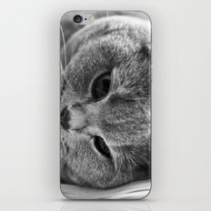 Cat Black white 3 iPhone & iPod Skin