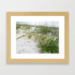 Sea Oats on Cape San Blas Beach Framed Art Print