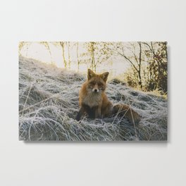 CLOSE-UP PHOTOGRAPHY OF FAX SITTING ON GREEN GRASS FIELD AT DAYTIME Metal Print