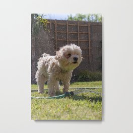 Dog by Elijah Ekdahl Metal Print
