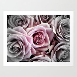 Pink Rose : Pop of Color Art Print