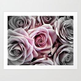 Pink Rose : Pop of Color Art Print