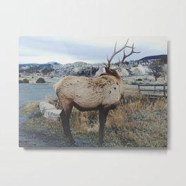 Mammoth Elk Metal Print