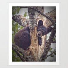 Photo of a Black Bear Cub in Northern Minnesota Art Print