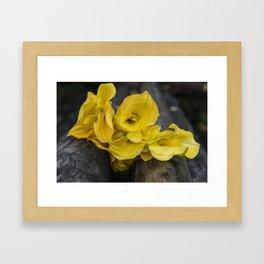 Yellow Callas Framed Art Print