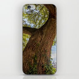 An old crooked oak tree iPhone Skin