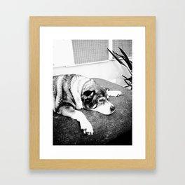 Lily at rest Framed Art Print