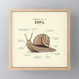Anatomy of a Snail Framed Mini Art Print
