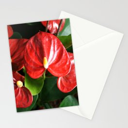 Red Flowers Anthurium Genus Stationery Cards
