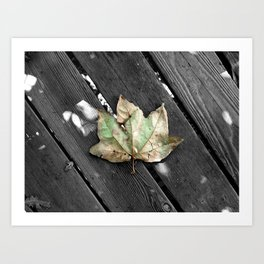Single leaf in a whole world of trees Art Print